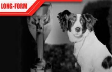 Nước Anh thoát 'bàn thua' ê mặt nhờ chú chó tìm thấy bảo vật túc cầu